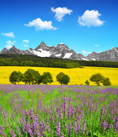 sky scape: Beautiful spring mountain landscape with flowering meadow Stock Photo