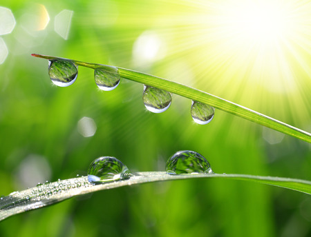 water on leaf: Fresh grass with dew drops close up Stock Photo