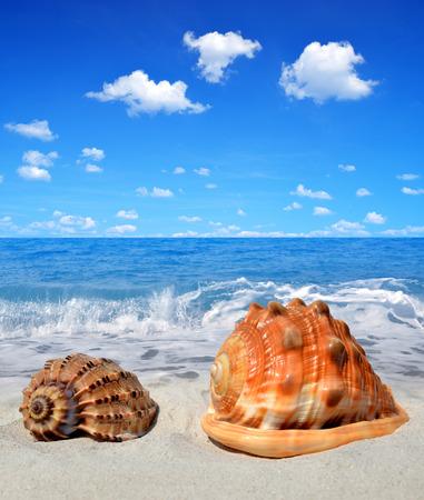 conch: Conch shells on beach  Stock Photo