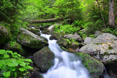 torrent: Mountain creek in the national park Sumava-Czech Republic