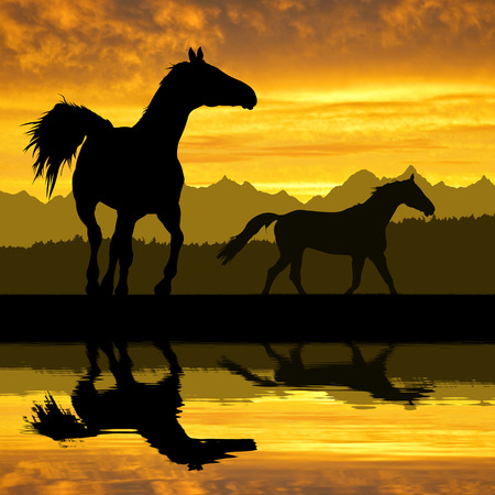 horses in the wild: Horse under sunset