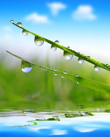 Fresh Grass with Dew drops schließen sich Standard-Bild