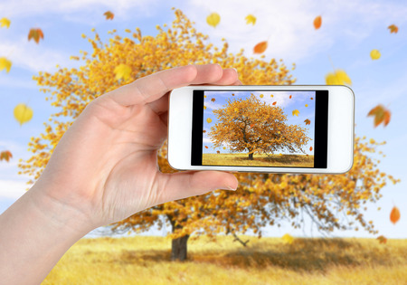 Hand taking photo of autumn landscape by smartphone photo