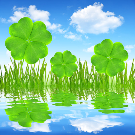 Fresh dewy green grass with clover leaf reflection on water surface photo