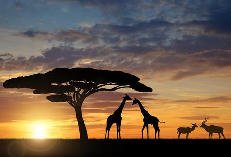 siluetas de animales: Jirafas con Kudu al atardecer