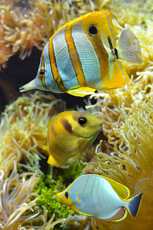 Tropical reef fish photo