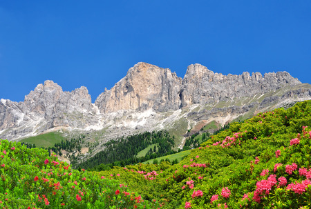 rosengarten: Dolomite peaks, Rosengarten,Val di Fassa, Italy Alps Stock Photo