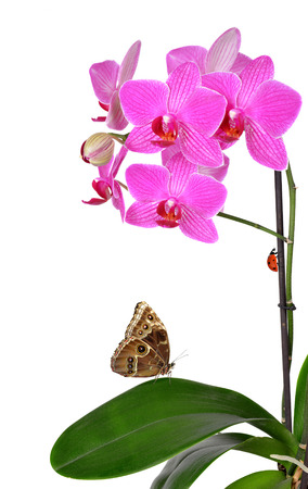 Closeup of a purple orchid with butterfly and ladybug isolated on white photo