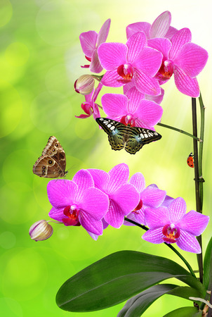 carpel: purple orchid with butterflies on green background