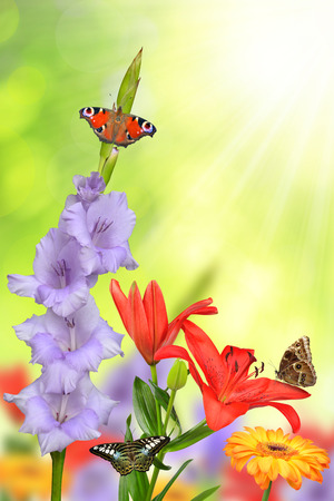 spring bud: Spring flowers with butterflies on green natural background