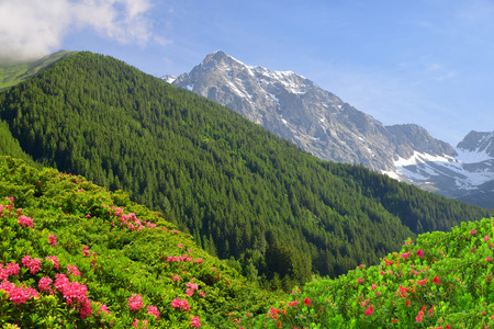 tauern: View of the mountains from the valley Antholzertal. Riesenfernergruppe mountain range, South Tyrol, Italy