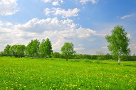 printemps meadow