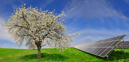 alternativ: Solar energy panels with blooming tree in spring landscape. Green energy.