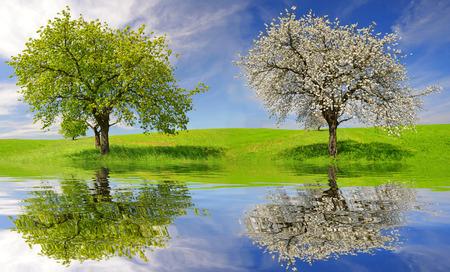 flowering field: Deciduous and flowering tree in spring landscape