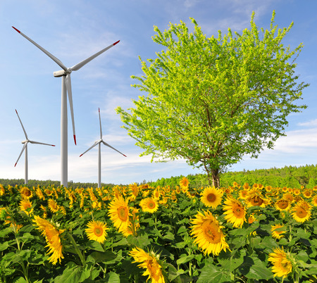 wind power plant: Sunflower field with tree and wind turbines. Spring landscape. Stock Photo