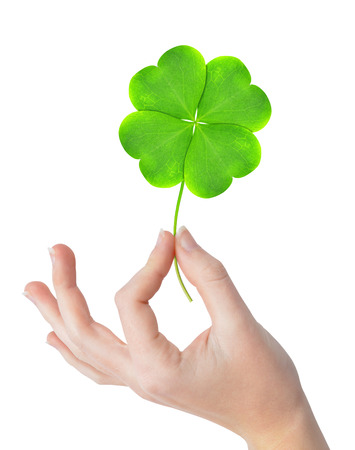 Green four leaf clover in hand isolated on white background Foto de archivo