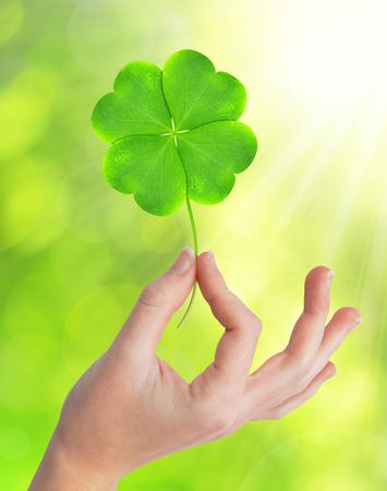 trefoil: Green four leaf clover in hand Stock Photo