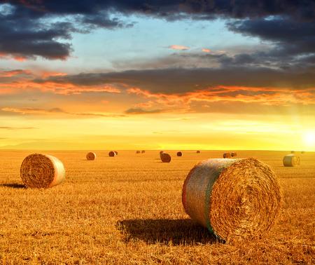 corn fields: Straw bales on farmland at sunset Stock Photo