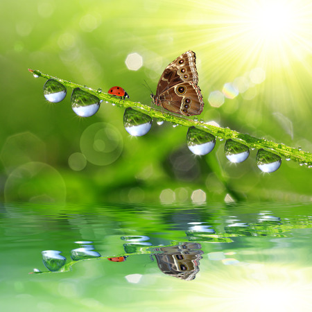 drop of water: Fresh green grass with dew drops and butterfly. Natural background.