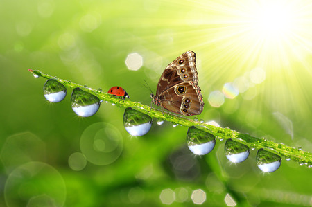 Fresh green grass with dew drops and butterfly. photo