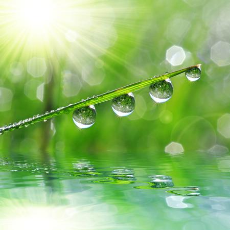 dew drop: Fresh green grass with dew drop closeup. Nature Background