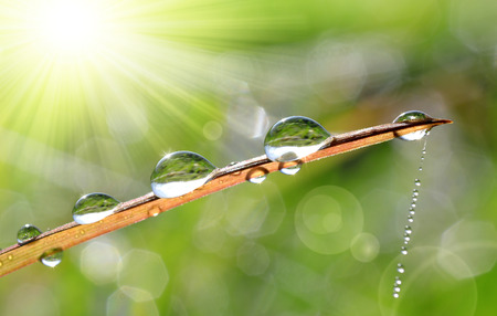 Fresh grass with dew drops closeup. Nature Background