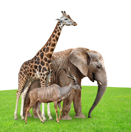 Giraffe Elephant and Kudu on meadow photo