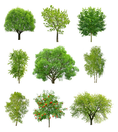 Great collection of deciduous trees isolated on white background