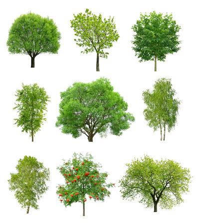 arboles frondosos: Gran colección de árboles de hoja caduca aislado en fondo blanco