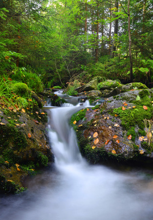 nant: Creek in the national park SumavaCzech Republic
