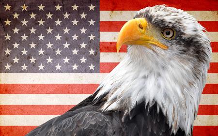 halcones: �guila calva de Am�rica del Norte en la bandera americana
