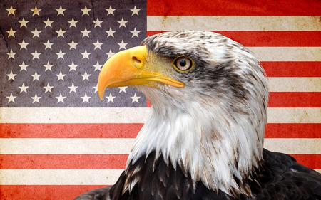 memorials: North American bald eagle on American flag Stock Photo