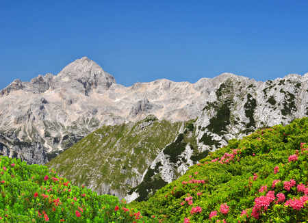 Triglav National Park  Julian Alps Slovenia Standard-Bild