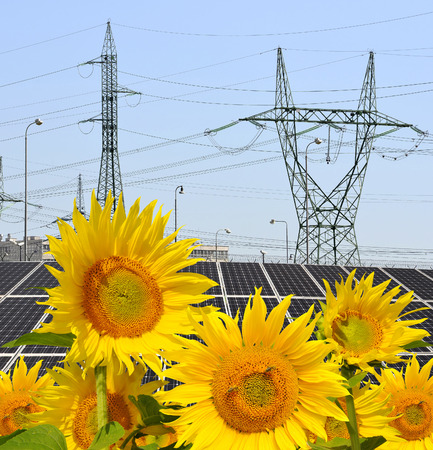 silicium: Sunflowers in the background solar energy panels and high voltage pylons