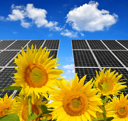 alternativ: Solar energy panels  in sunflower field. Green energy.
