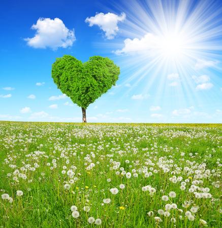 gebied van paardebloemen met boom in de vorm van hart Stockfoto