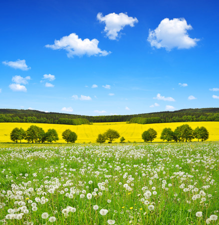 spring landscape: Spring landscape with dandelions on the meadow - Czech Republic