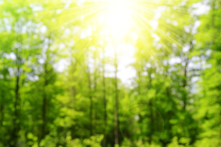 sunshine: Green bokeh in the forest with sunshine. Nature abstract background.