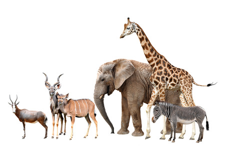 African mammals isolated