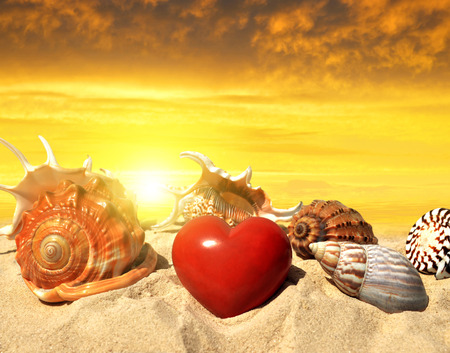 conch shell: Conch shell with heart on beach in the sunset