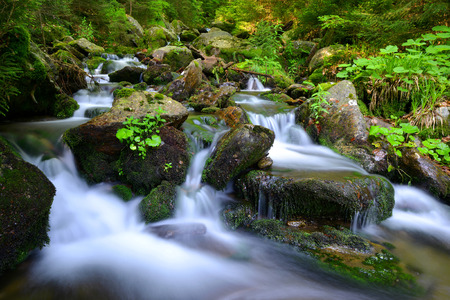 beautiful scenery: Creek in the national park Sumava-Czech Republic