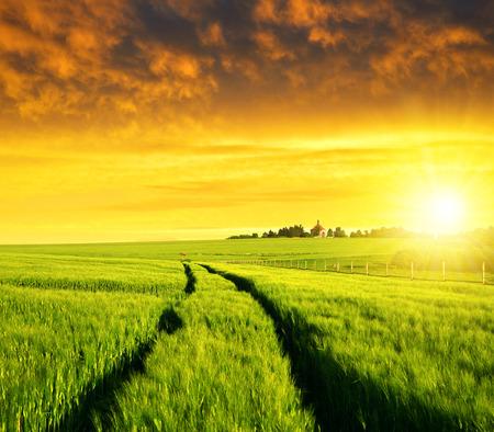 cebada: Puesta de sol sobre los campos de trigo. Foto de archivo