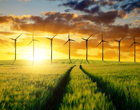 farm field: wheat field with wind turbines at sunset