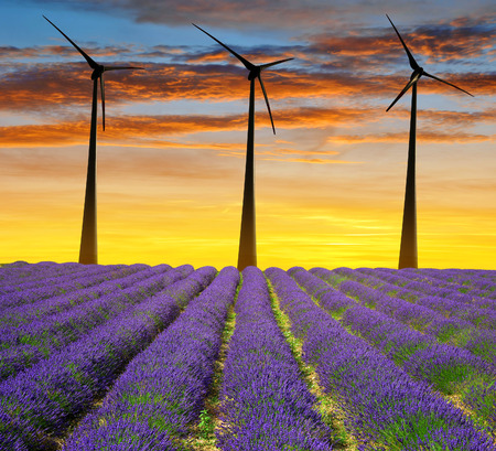 power nature: Lavender field with wind turbines at sunset