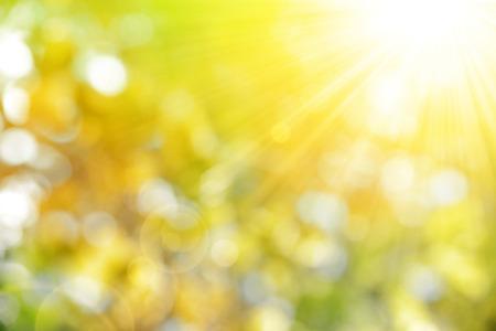 luz natural: Soleado fondo naturaleza abstracta del oto�o Foto de archivo