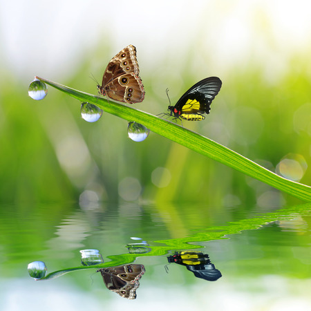 reflection: Fresh green grass with dew drops and butterflies. Natural background.