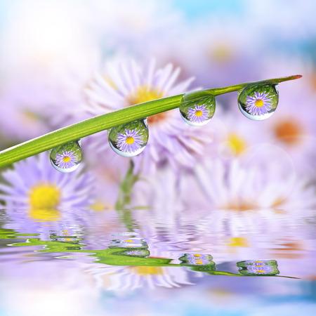 Blumen in den Tautropfen auf dem grünen Rasen. Natur Hintergrund.