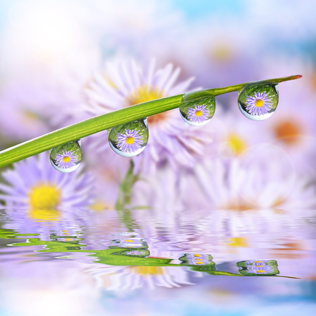 Flowers in the drops of dew on the green grass. Nature background.