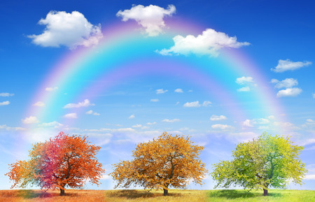 trees seasonal: Seasonal trees with blue sky and rainbow Stock Photo