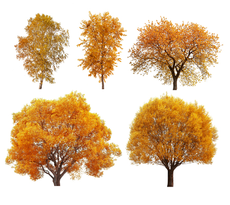 Great collection of autumn trees isolated on white background